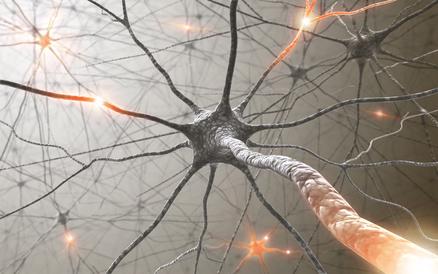 Vernetzungen im Gehirn